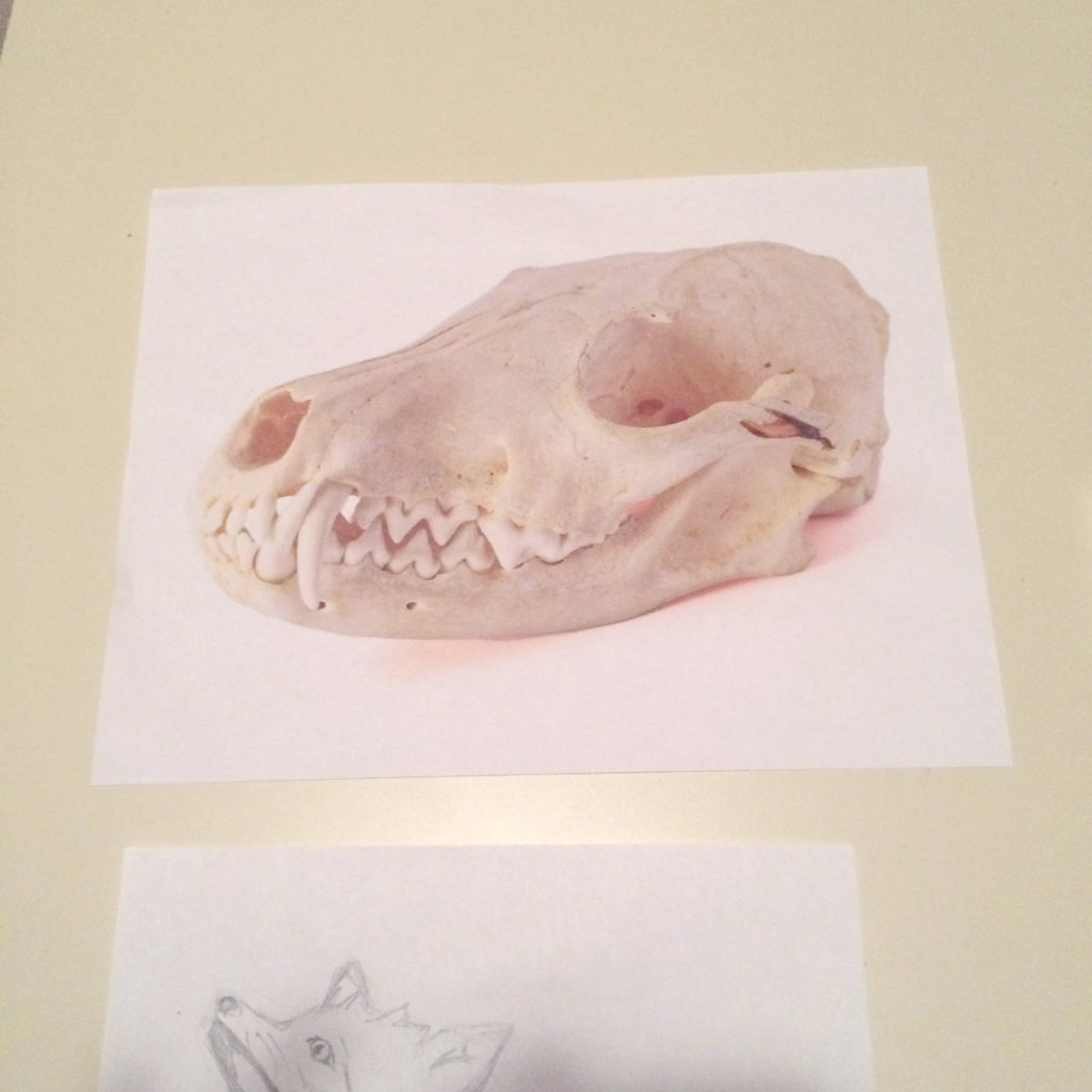That's a fox skull. That's right - this isn't going to be a project with rainbows and butterflies.